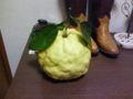 気の良いおっちゃんに貰った獅子柚。香りが落ちたら風呂に入れよう。