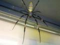 秦野中井インダハウス!!秦野市のファミマにはデカい女郎蜘蛛がいた
