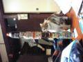 00ネタ、軌道エレベータと愛猫もこたん〓〓笑