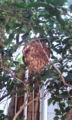 蜂の巣怖い。 wasp's nest