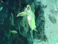 携帯の写真フォルダを漁ってたら見つけた。ウミガメはやっぱり可愛い