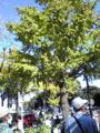 横浜国際女子マラソン、周回コースで貿易センター前通過中。カッコイ