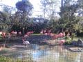 天皇即位20周年で上野動物園、無料だった。小さい頃来たことあるらし