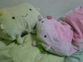 抱き枕にしてるはんなり逹。左:初めて買った柚子のはんなり豆腐、通