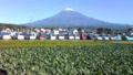 今日の富士山はくっきり綺麗でした。小春日和だったしね。  富士宮市