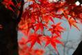 今週はずっと寒そう、紅葉も もうちょとかなー。