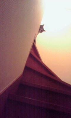 なんかネコが階段上から誘ってる
