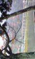 渡月橋なう!紅葉綺麗だなー!