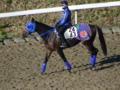 ステイヤーズSに登録しているモンテクリスエスです。鞍上は鮫島良騎