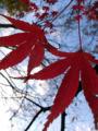 さっきすれ違った人ねー、チュートリアルの徳井☆今日は落ち葉をふみ