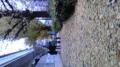 大好きな千駄ヶ谷は銀杏でいっぱい