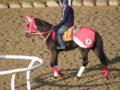 阪神JF ラナンキュラス。四位騎手を背に坂路で53.6ー39.6ー26.1\xA1 \xBC