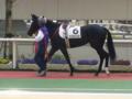 阪神競馬5R、新馬戦の勝ち馬ナリタブルースターです。 #keiba