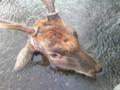 海沿いを歩いていたら鹿を解体している人がいた。林害が酷いそうだ。