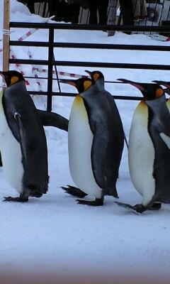 旭山動物園を堪能しましたなう。マイナス6℃も気にならないよ!\(((
