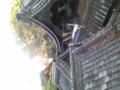 今日は年末屋根そうじ。枯れ葉もりもり。登れる屋根があるって嬉しい