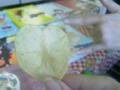 ポテトチップがハート型だった!!