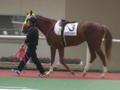 阪神競馬3R 1番人気 セイクリッドセブン #keiba