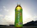 八女農業高校の緑茶ペットボトル