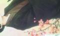 リク四枚目の菊できた…!すごく…棒立ちです…^^