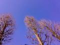 今日すごく空がきれい いいねえ
