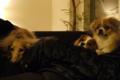 昨日(26日)、犬友プチ忘年会。来年はもっと仲良しになれたらいいね。