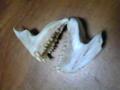 鯛のアラ食った