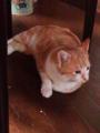 インダハウス(実家)  猫が成人式的な白いもふもふ襟巻きを巻いている