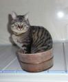 父から送って貰った「風呂ネコ」♪