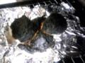 ミッキー餅の50%以上が炭に・・・・ #oyajibu