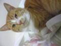 精一杯フォトジェニックを気取る実家の猫。ブスすぎてカワイイ。