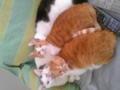 テスト #cat #neko