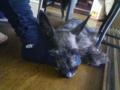 母の足を枕にヒーターの前で溶けるいぬ。