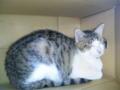 うちで一番の美猫さまは触ってたら暖房の中へ逃げました