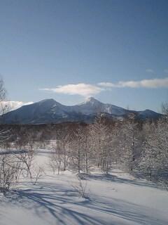 今日は昨日より良い天気。木々に雪が乗って更に美しい風景です。にゃ