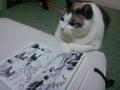 ねこがベルばらを読んでいます