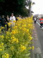 いぶすき菜の花マラソンスタート地点です #nanohana #jog_jp