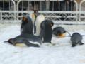 ペンギンが…なう