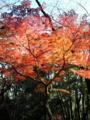林試の森公園:デイキャンプ場の紅葉