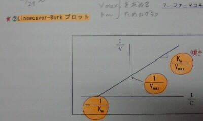 VmaxとKm求めるためのグラフ