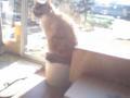 一番くじのバッドカンパニーのケース上に陣取る猫