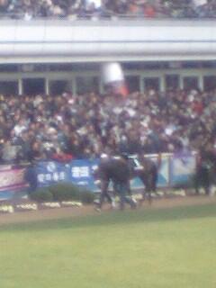 中山競馬なう。ミヤビランベリの弟、ミヤビベガinグッドラックハンデ