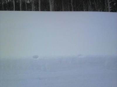北海道のパウダースノーが恋しいな。な、なんて思ってないんだからね
