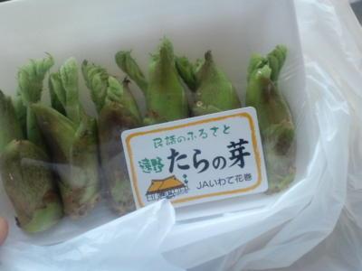 栗林の隣の八百屋にタラの芽売ってたので購入。天麩羅にする予定。