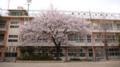 少子化による近隣小学校との合併で母校が2年前壊された。お別れにと