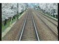 小林‐仁川間の桜。7分咲き。