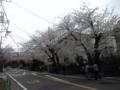 鎌倉山の桜。