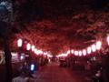 称名寺…は 葉桜大会。