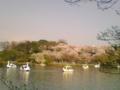 洗足池です♪ 桜も最後かな