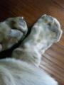 豚足のような脚w(犬ですが)